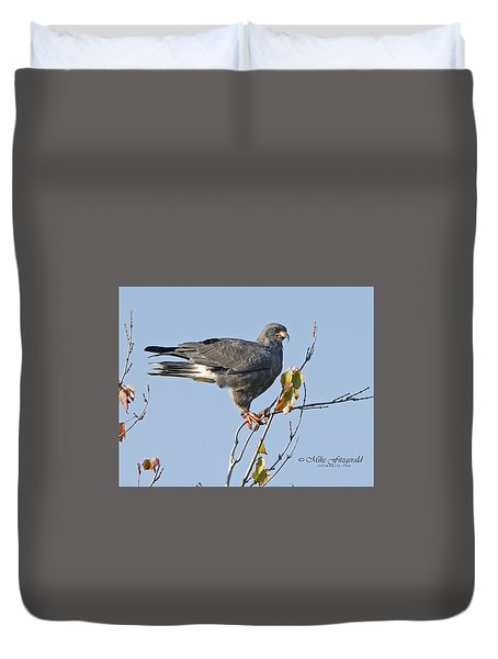 Male Snail Kite Poses Duvet Cover