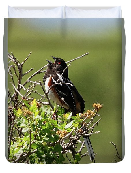 Male Spotted Towhee Duvet Cover