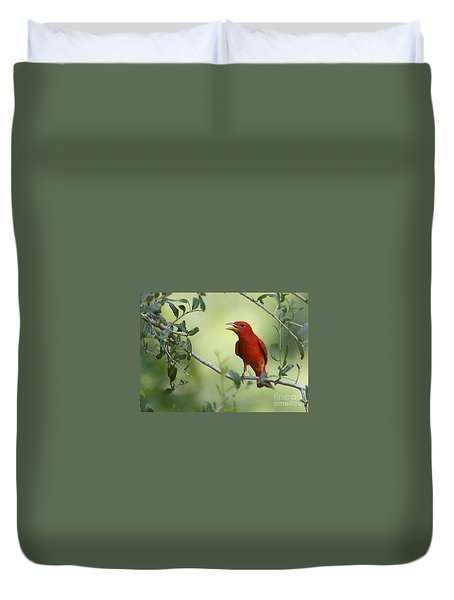 Male Summer Tanager Duvet Cover by Myrna Bradshaw