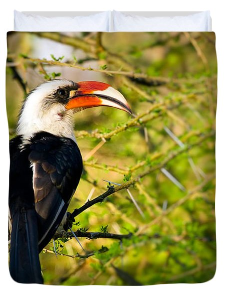 Male Von Der Decken's Hornbill Duvet Cover by Adam Romanowicz