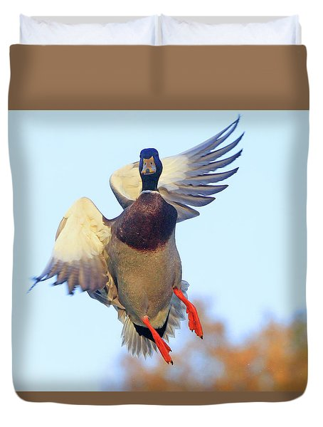 Mallard In Flight 2 Duvet Cover