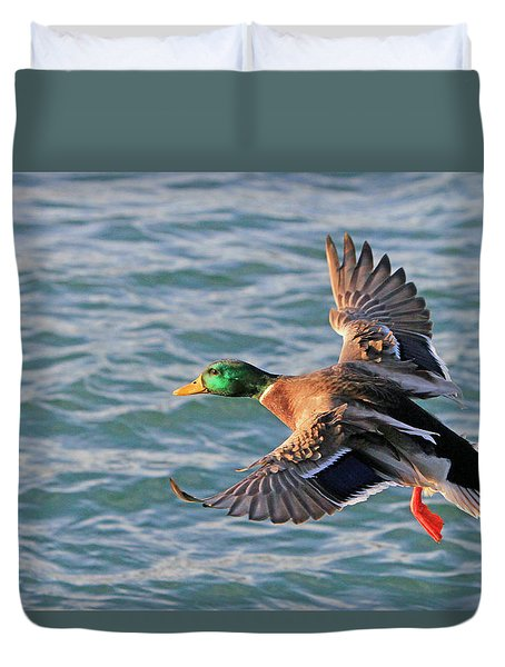 Mallard In Flight 3 Duvet Cover
