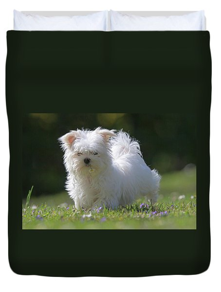 Maltese And Daisy Duvet Cover