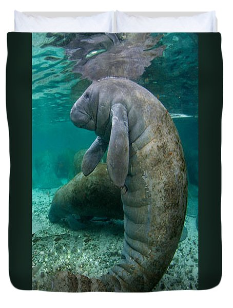Manatee In Crystal River Florida Duvet Cover