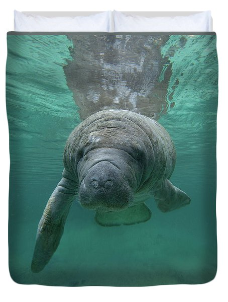 Manatee Duvet Cover by Tim Fitzharris