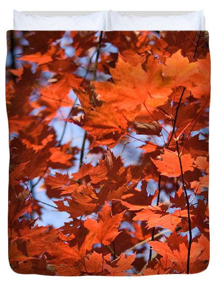Maple Leaves Aglow Duvet Cover