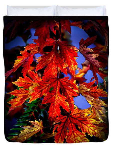 Maple Leaves Duvet Cover by Robert Bales