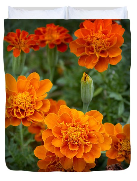 Duvet Cover featuring the photograph Marigolds by Megan Dirsa-DuBois