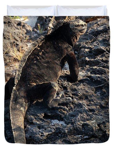 Marine Iguana, Amblyrhynchus Cristatus Duvet Cover