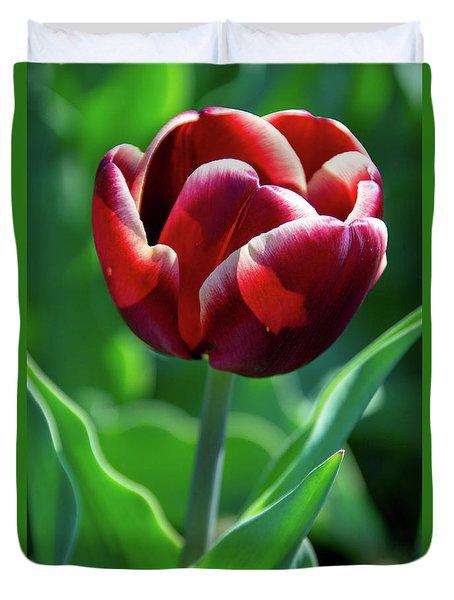 Maroon Tulip Duvet Cover