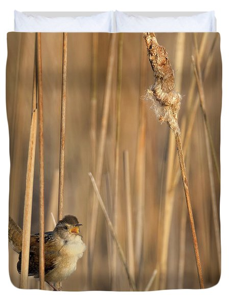 Marsh Wren Square Duvet Cover