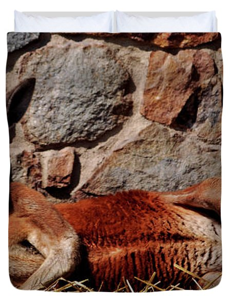 Marsupial Centerfold Duvet Cover by Lori Tambakis