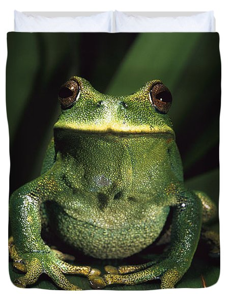 Marsupial Frog Gastrotheca Orophylax Duvet Cover by Pete Oxford