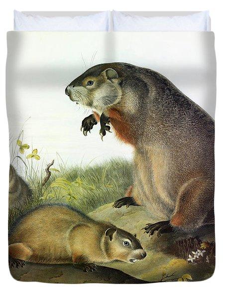 Maryland Marmot, Woodchuck, Groundhog Duvet Cover