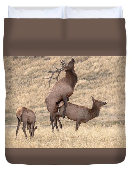 Duvet Cover featuring the photograph Mating  by Kelly Marquardt
