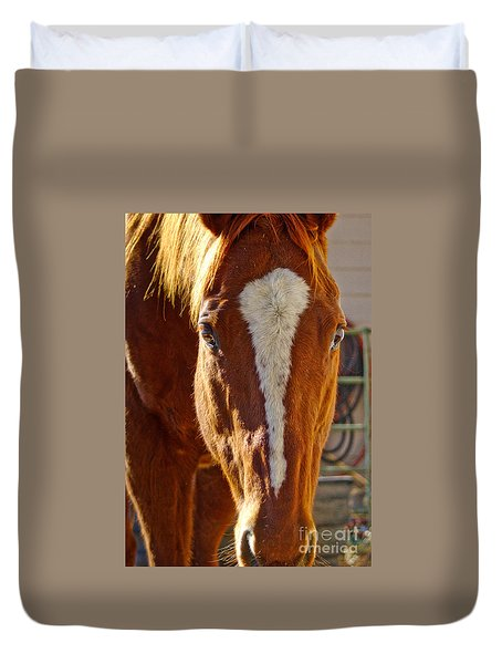 Mccool, Grandson Of Secretariat Duvet Cover