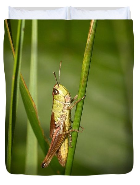 Duvet Cover featuring the photograph Meadow Grasshopper by Jouko Lehto