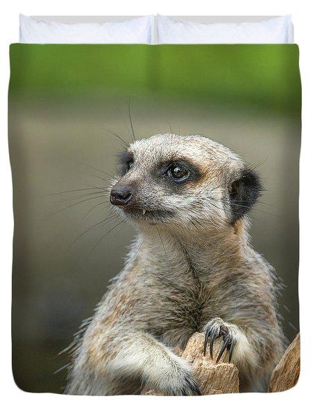 Meerkat Model Duvet Cover by Racheal  Christian