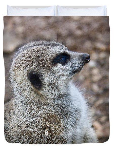 Meerkat Portrait Duvet Cover by Douglas Barnett