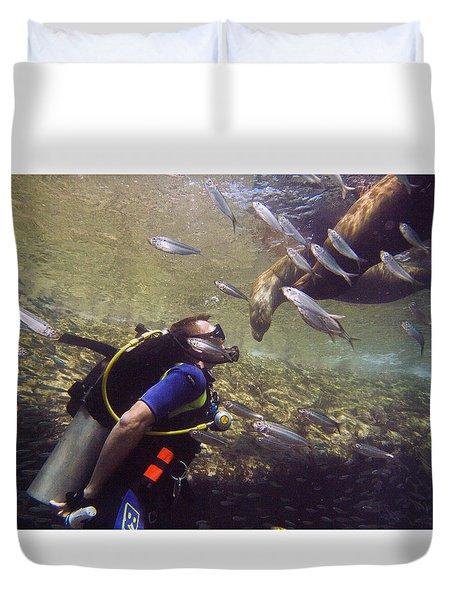 Meet The Sea Lions Duvet Cover