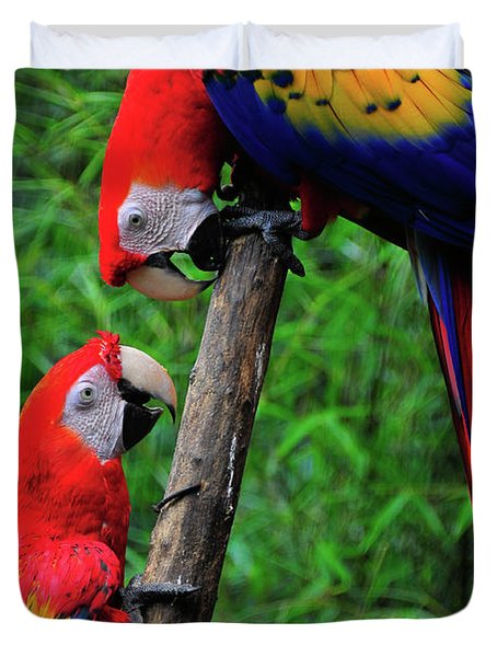 Meeting Of The Macaws  Duvet Cover by Harry Spitz