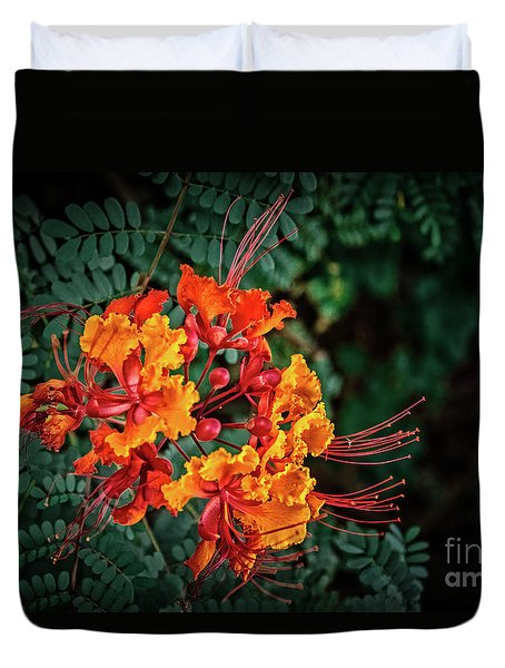 Mexican Bird Of Paradise Duvet Cover by Robert Bales