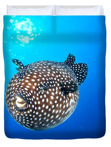 Mexico Guineafowl Puffer Duvet Cover by Dave Fleetham - Printscapes