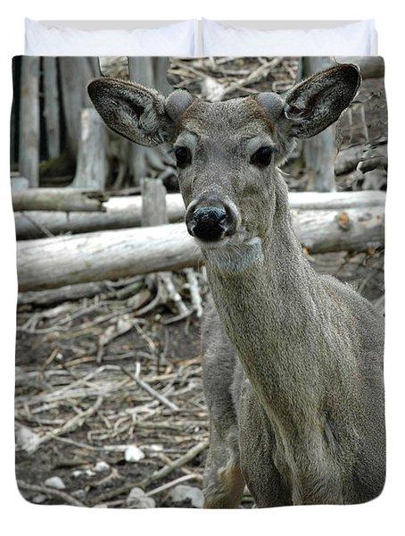 Duvet Cover featuring the photograph Michigan White Tail Deer by LeeAnn McLaneGoetz McLaneGoetzStudioLLCcom
