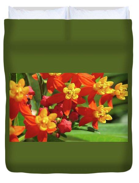 Milkweed Flowers Duvet Cover by Melinda Saminski