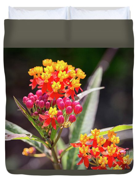 Milkweed Silky Deep Red Duvet Cover by Louise Heusinkveld