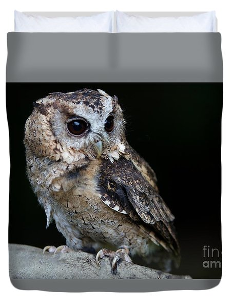 Minature Owl Duvet Cover