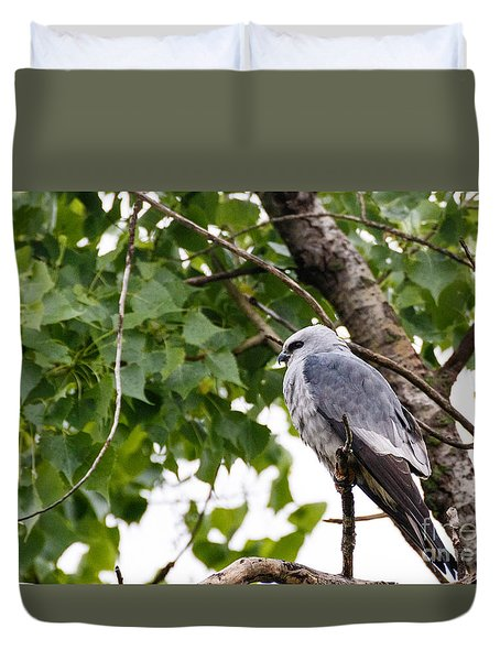Mississippi Kite At Rest Duvet Cover