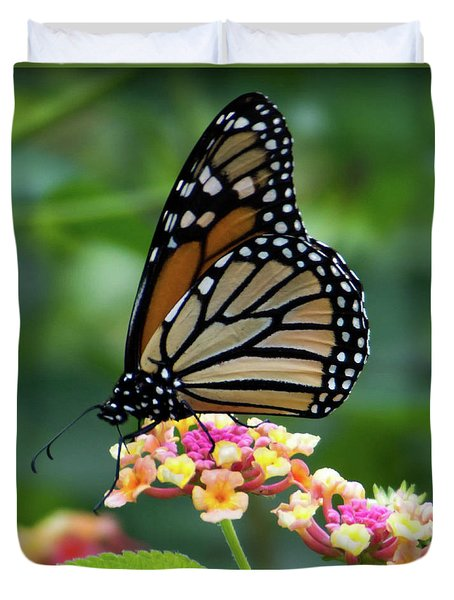 Monarch Butterfly Art II Duvet Cover