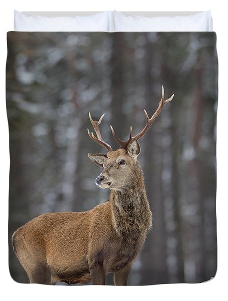 Monarch Of The Woods Duvet Cover