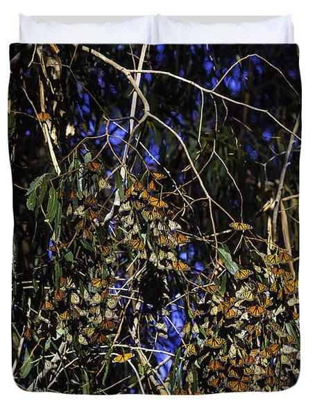 Monarchs Wintering Duvet Cover