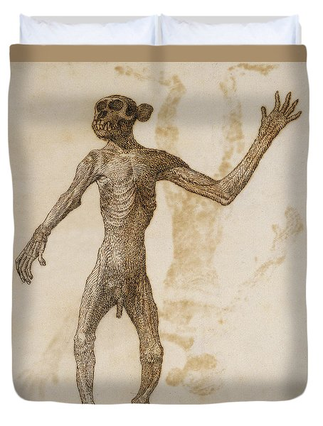 Monkey Standing, Anterior View Duvet Cover by George Stubbs