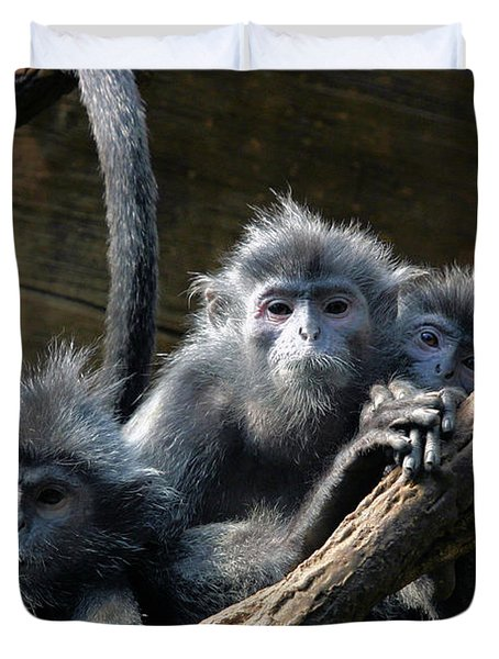 Monkey Trio Duvet Cover by Karol Livote