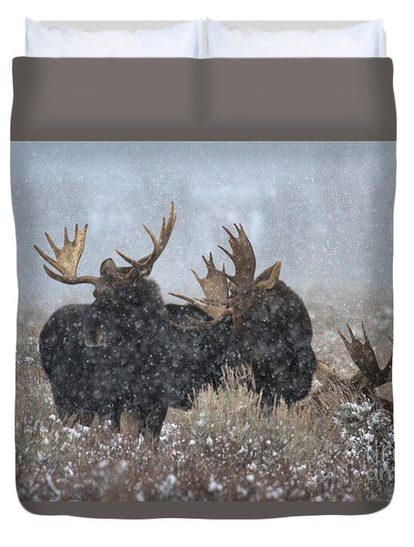 Duvet Cover featuring the photograph Moose Antlers In The Snow by Adam Jewell