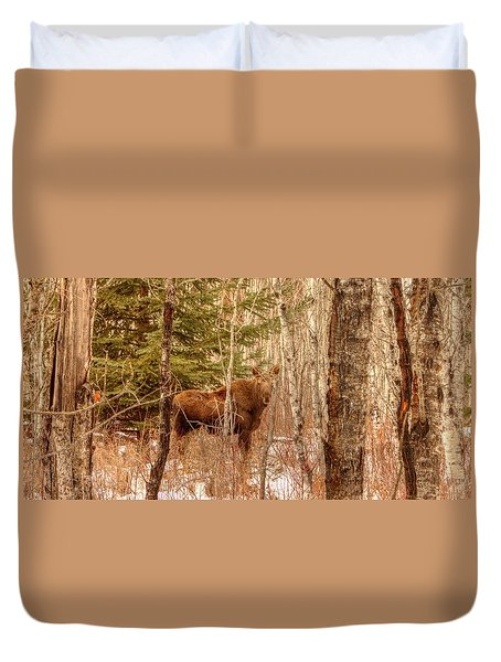 Duvet Cover featuring the photograph Moose Calf by Jim Sauchyn