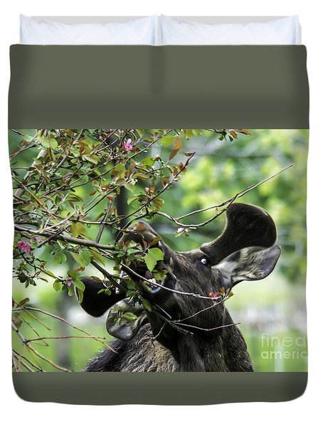 Moose Eating Crab Apple Tree Duvet Cover