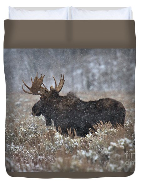 Duvet Cover featuring the photograph Moose In The Snowy Brush by Adam Jewell