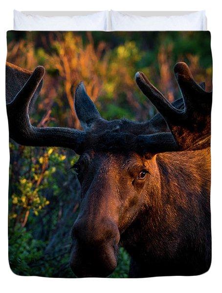 Moose Sunrise Duvet Cover