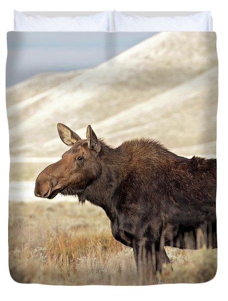 Morning Moose Duvet Cover