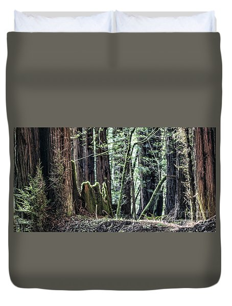 Duvet Cover featuring the photograph Morning Redwoods by Shirley Mangini