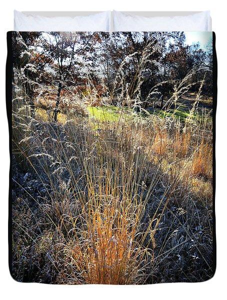 Morning Sun Backlights Fall Grasses In Glacial Park Duvet Cover