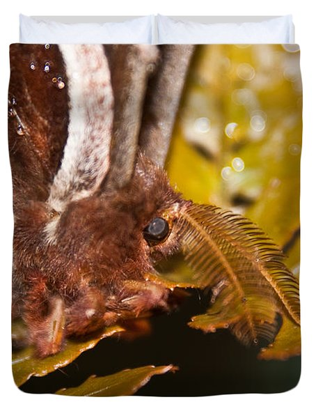 Moth Up Close And Personal Duvet Cover