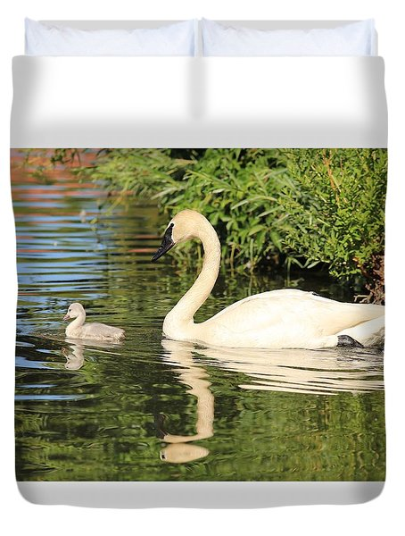 Duvet Cover featuring the photograph Mother And Baby Trumpeter Swans by Lynn Hopwood