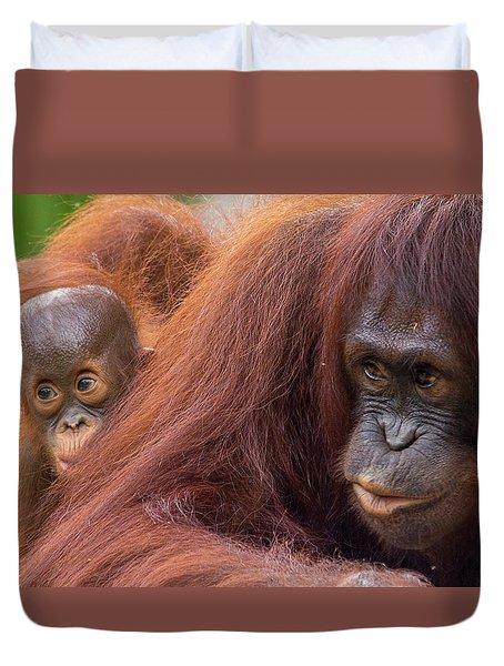 Mother Orangutan With Baby Duvet Cover