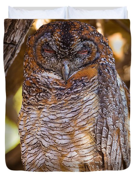 Mottled Wood Owl, India Duvet Cover