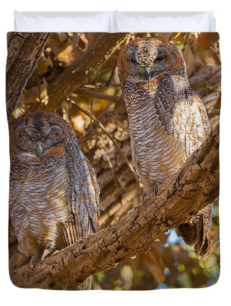 Mottled Wood Owls, India Duvet Cover